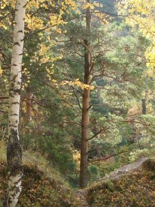 Дача Козловы горы, жильё посуточно, Россия, Костромская область ... | 425x319